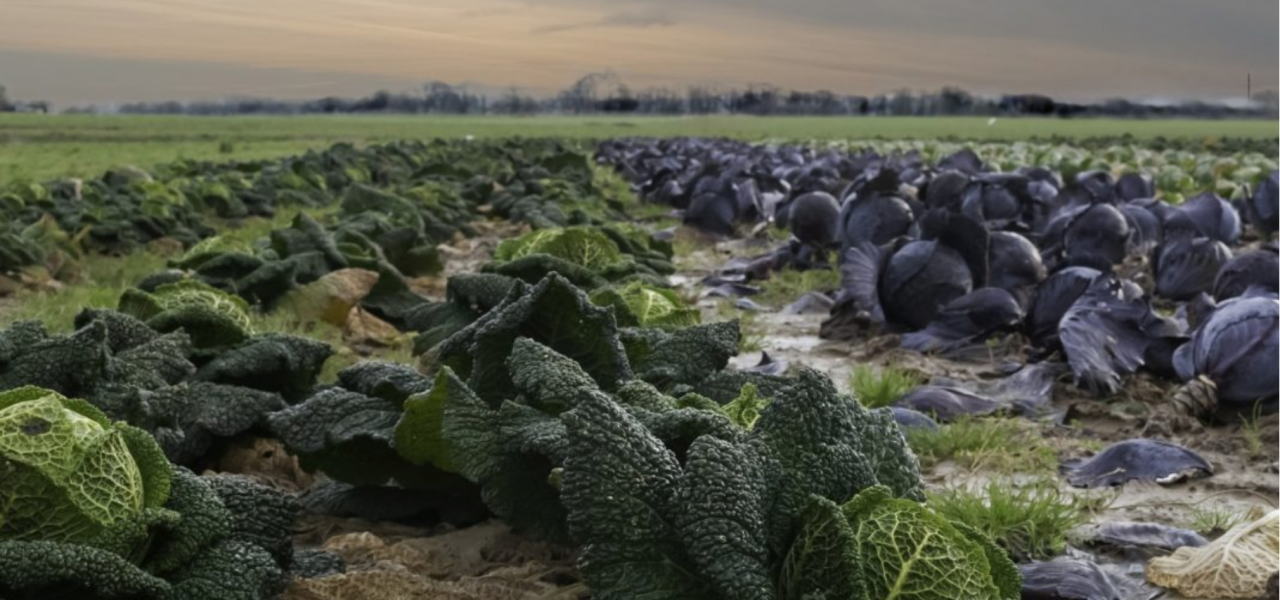 Si le bio ne suffit pas, qui sauvera nos fermes? - Maïté Vandoorne - POUR - www.pour.press