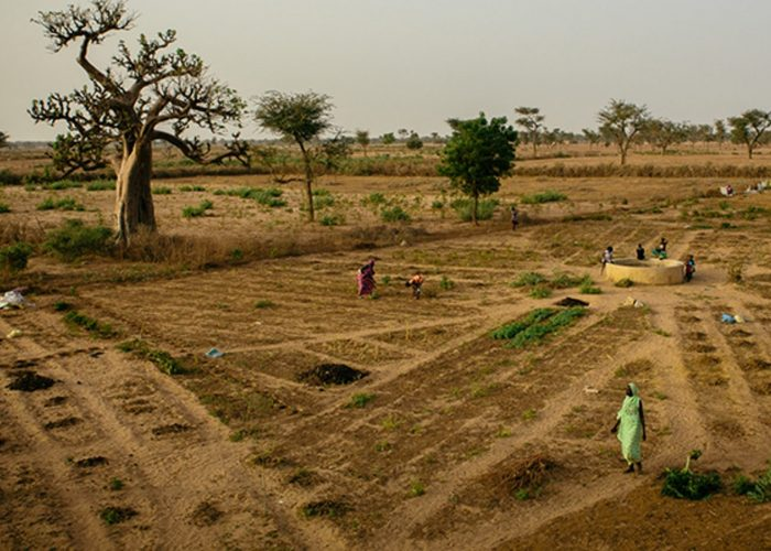 Comment nourrir 9,7 milliards d'êtres humains en 2050?