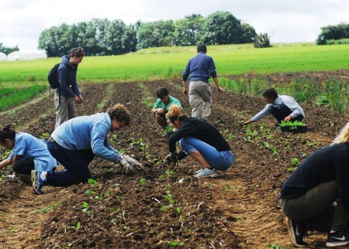 La ceinture alimentaire :écosystème de forces vivantes