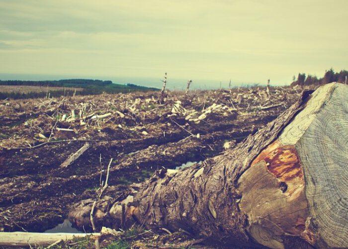Écologies du Nord et du Sud: les communs comme exemple de réappropriation populaire de l'environnement naturel et urbain